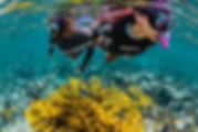 PADI Rescue Diver, SCUBAPRO, matériel de plongée, détendeur, stab, ordinateur, combinaison.Ecole de plongée à Paris. Formation à la carte. Cours et brevets PADI en fosse de 20m, piscine, mer et lac du débutant au moniteur. Vente Livre Manuel PADI