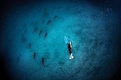 SCUBAPRO. Scuba diving, requin, sharks, ladscape. Spécialité Profonde Deep, Formation à la carte. Cours et brevets PADI en fosse 5, 10, 20m, piscine, mer, lac du débutant au moniteur. Vente Livre Manuel PADI