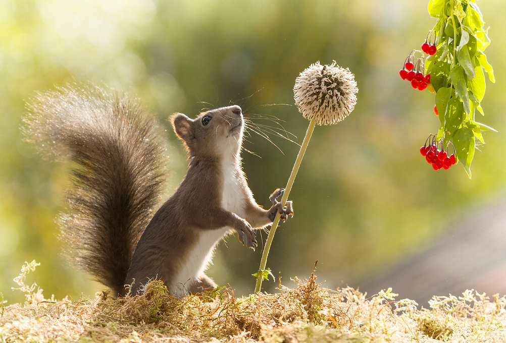 websquirrel.jpg