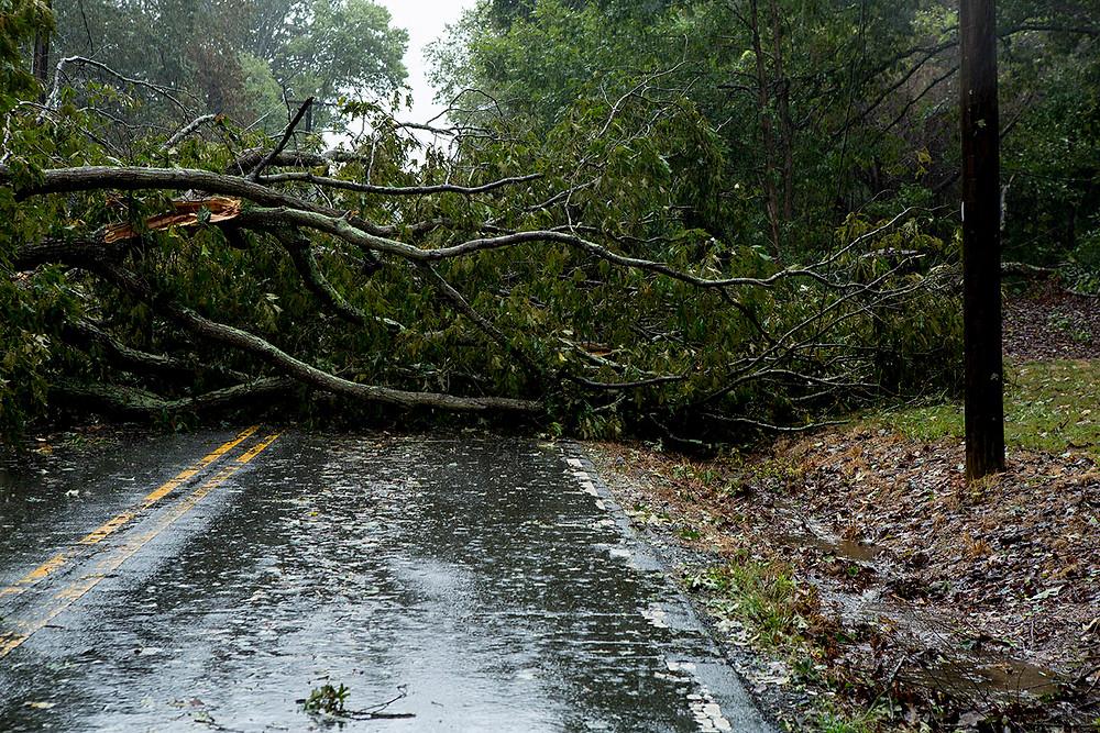 Tree fallen across Oak Summit Rd
