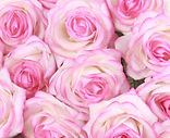 Real Touch Rose White & Pink