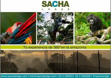 Sacha Lodge.jpg