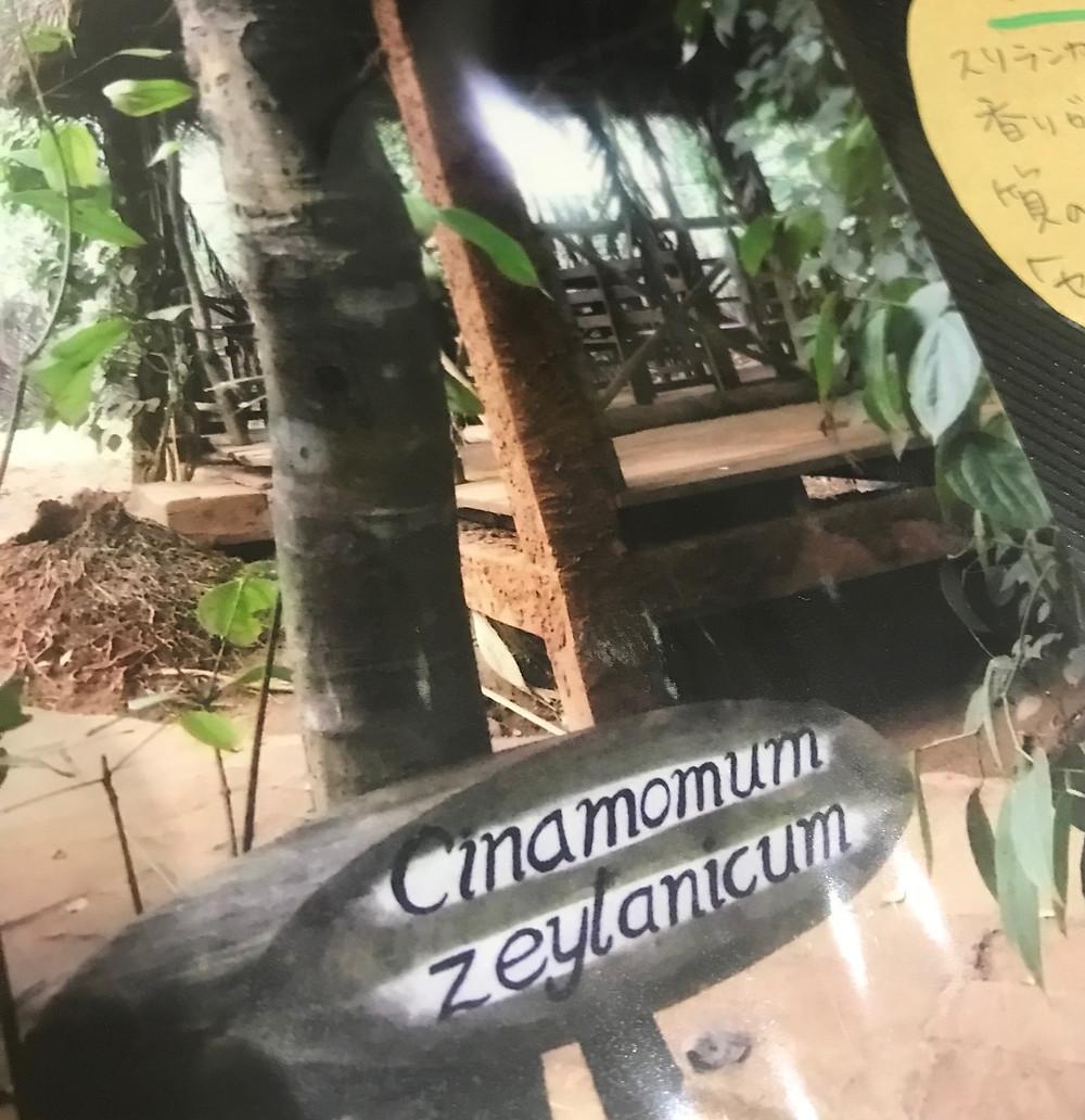 スリランカの植物園にて
