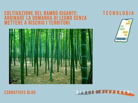 Coltivazione del Bambù Gigante: arginare la domanda di legno senza mettere a rischio i territori