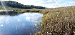 Wetlands in The Sandstone Project