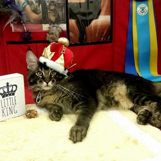 king choc international show SDCA.jpg