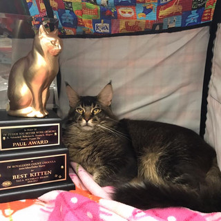 Choc with BEST KITTEN REGION award.jpg