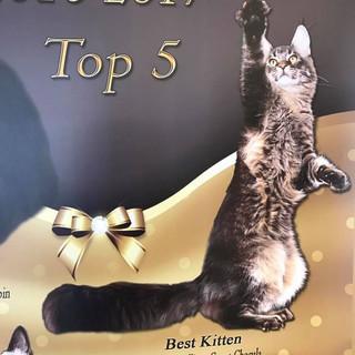 Choc Best Kitten:4th IW banner.jpg