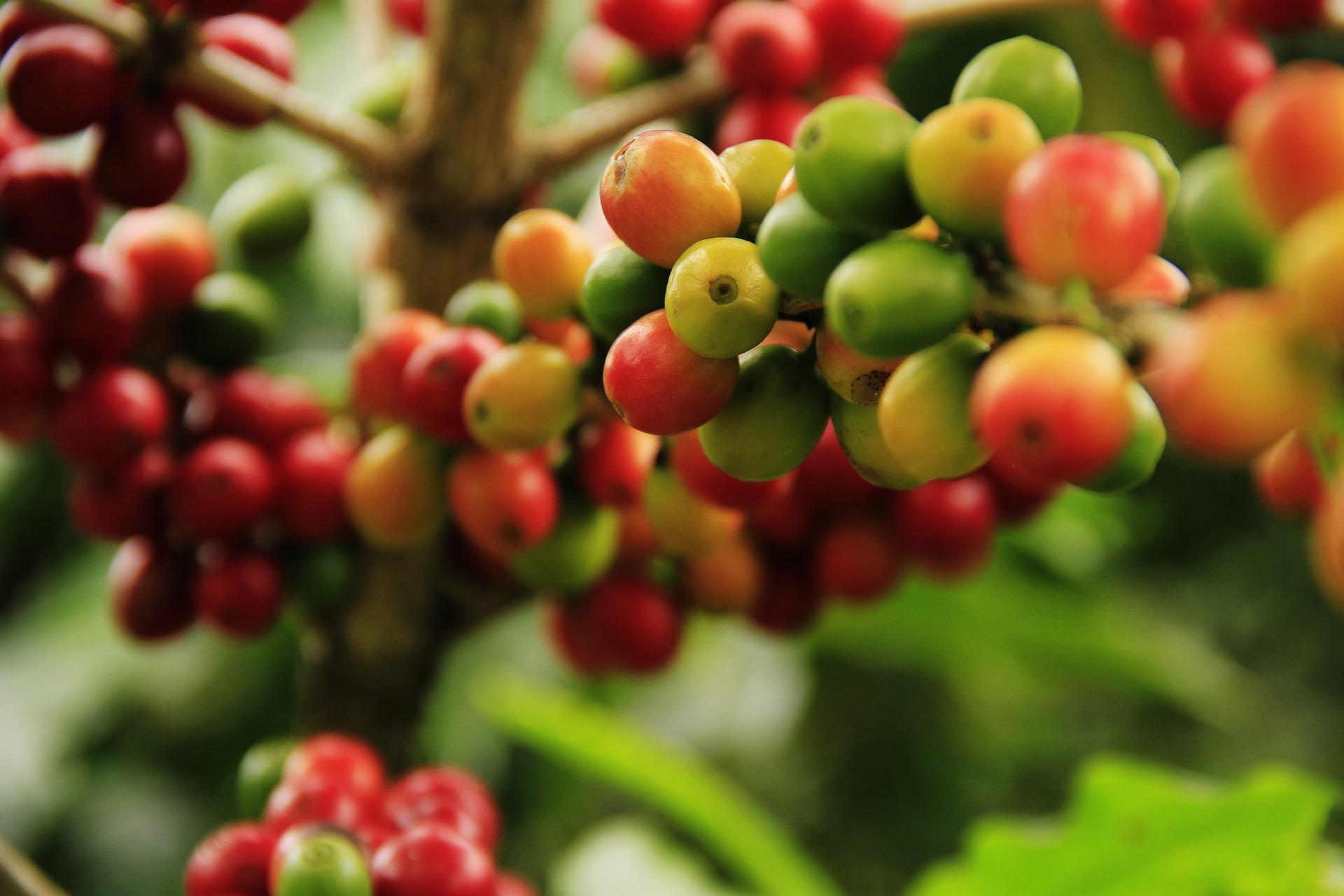 coffee-1474601_1920