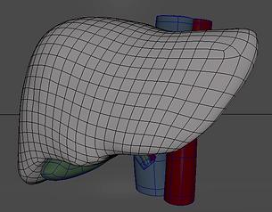 wireframe liver maya autodesk anatomy topology