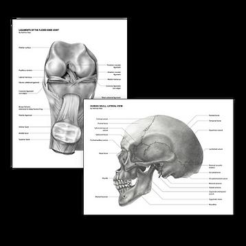 medical art sci illustration science textbook medicine katrina hass