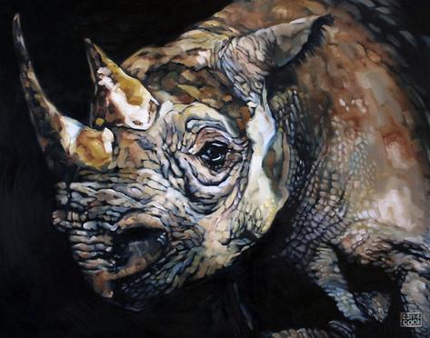 The Vanishing - Western Black Rhino, Now Extinct
