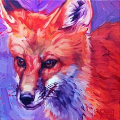 Red Fox #2
