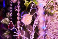 Заснеженные розы