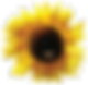 AA%20Sunflower_edited.png