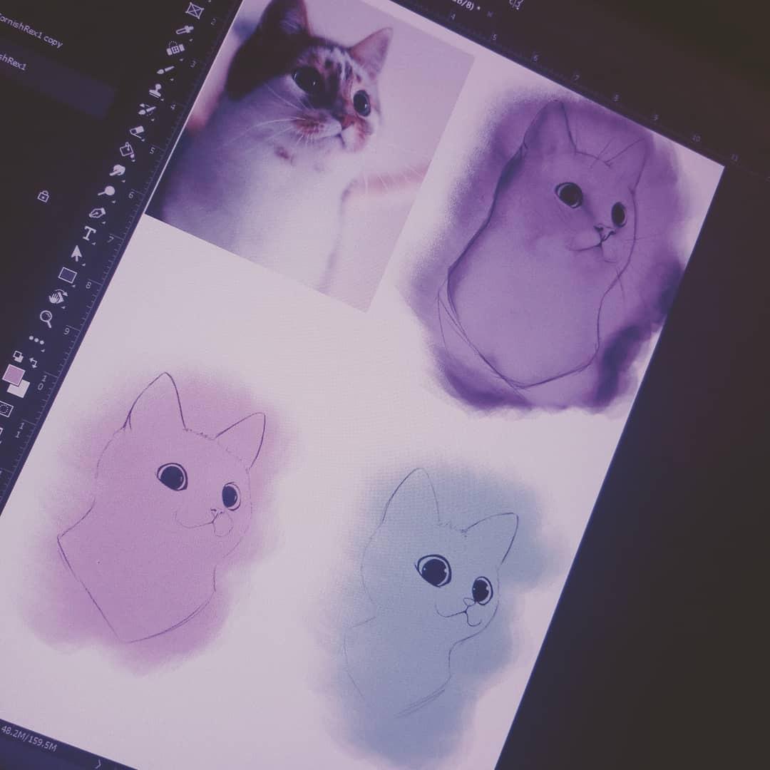 Cat studies