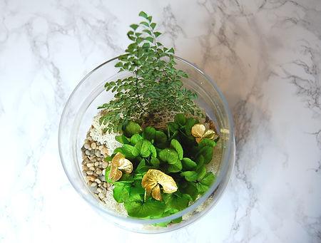 terrarium XL- hortensia.jpg