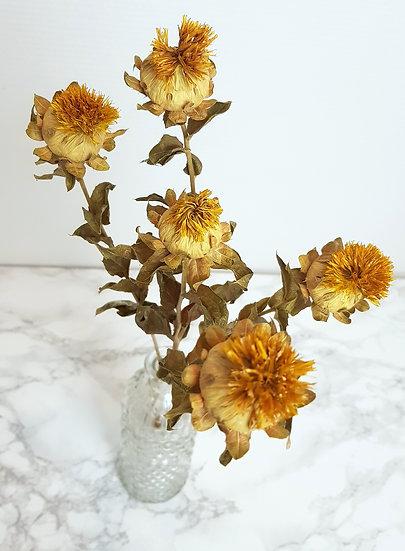 Carthame jaune