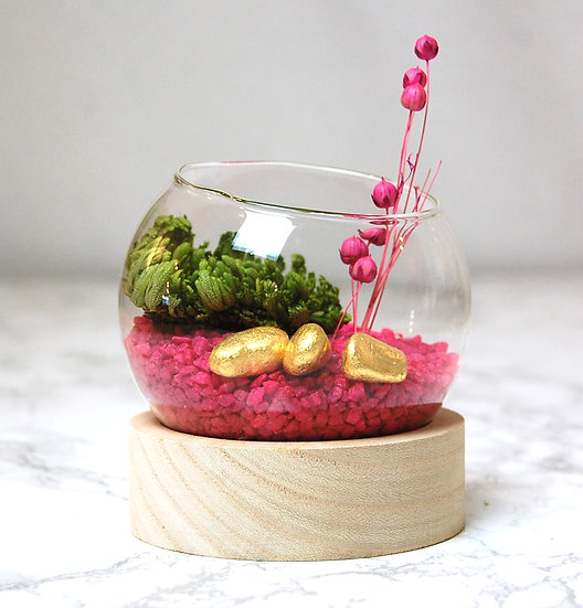 Terrarium mini rose