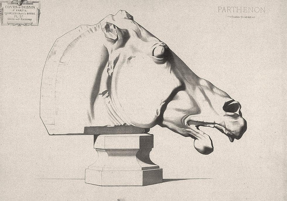 Bargue-Parthenon-Horse-Head.jpg