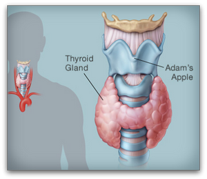 Essential Hypothyroidism Facts #2 blog article by Jane Goodman of Goodman Holistic Therapies, Northampton | 07908 010 005