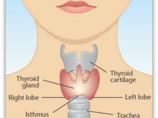 Essential Hypothyroidism Facts #1
