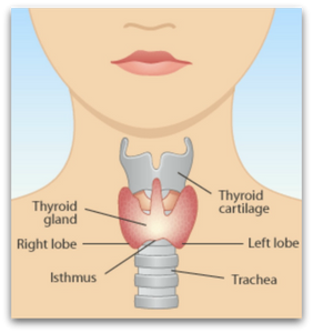 Essential Hypothyroidism Facts blog article by Jane Goodman of Jane Goodman Holistic Therapies, Northampton