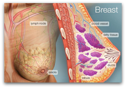 Bowen Breast Procedure blog article by Jane Goodman of Goodman Holistic Therapies