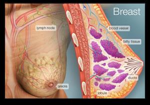 Bowen Breast Procedure blog article by Jane Goodman of Goodman Holistic Therapies