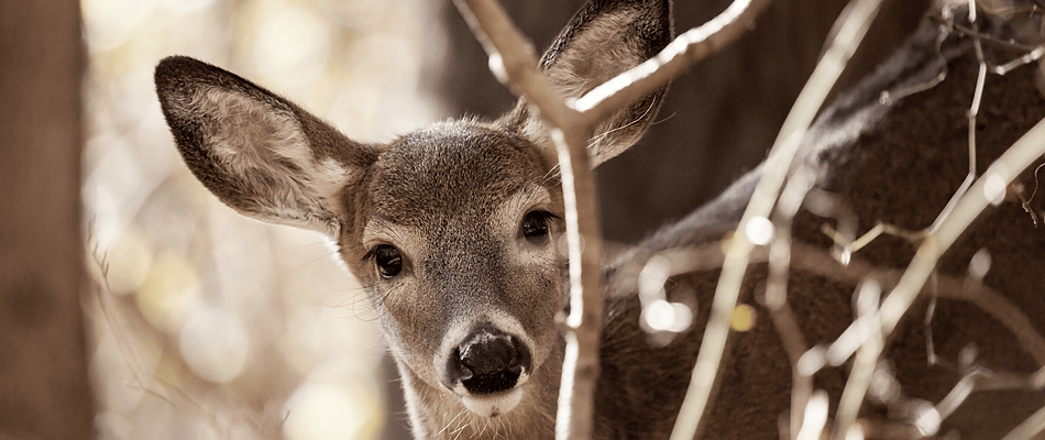 Communications that matter Deer.png