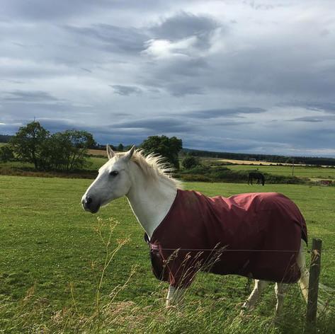 Horse in Moray