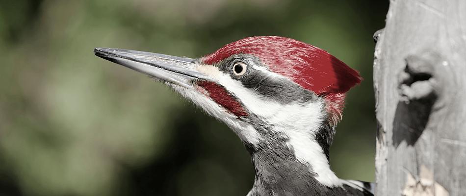 Communications that matter Woodpecker.pn