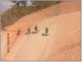 BR-381/MG: conheça o Programa de Recomposição Ambiental