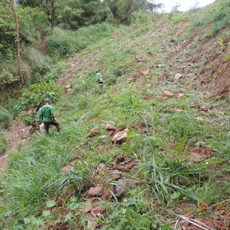 DNIT inicia plantio de mudas para recomposição vegetal e tratamento paisagístico da BR-381/MG