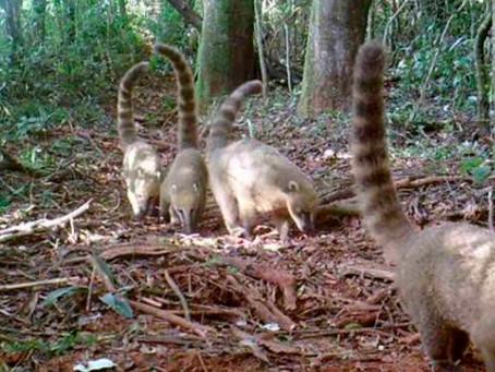 Gestão Ambiental na BR-381/MG: março celebra três datas importantes para a fauna e flora