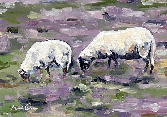 Quiet Pastures
