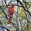 Thumbnail: If Birds Can Sing