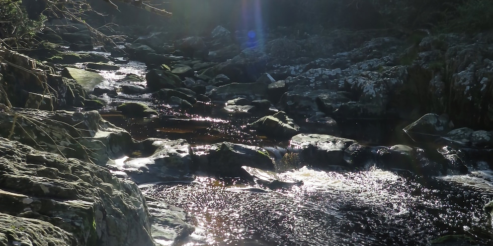 Silent Forest Meditation