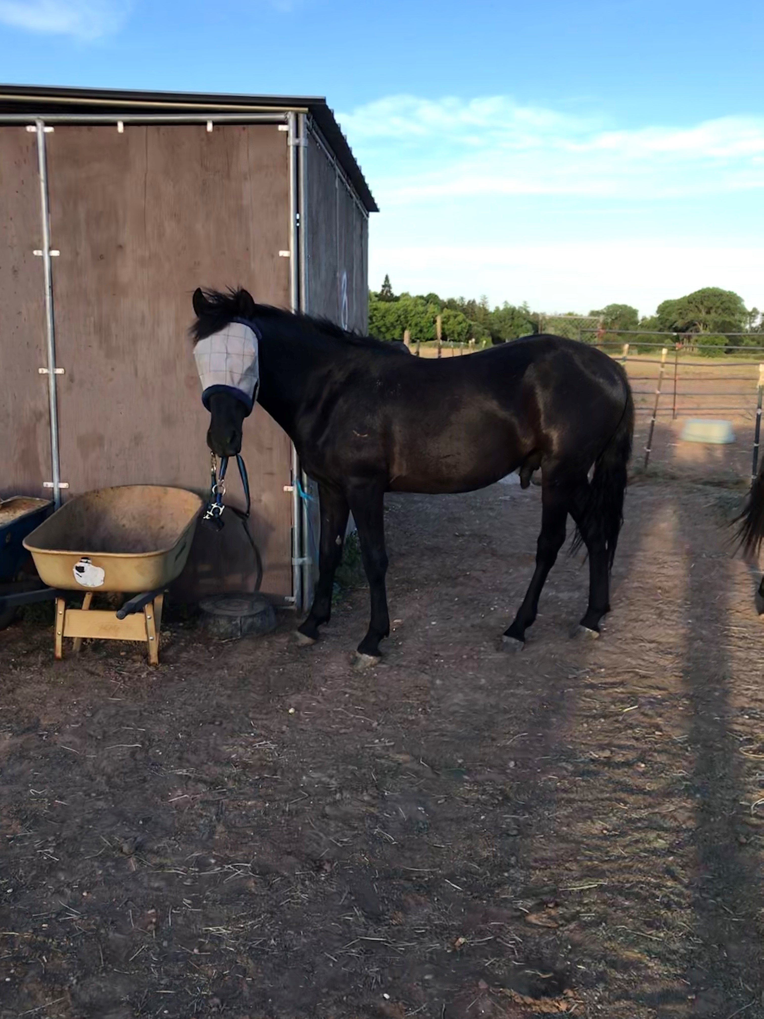 Storm carrying halter