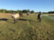 Pasture horses.jpg