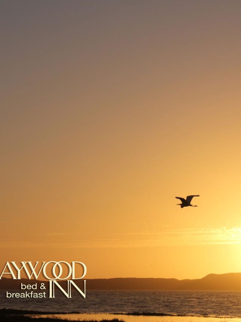 Estero.Baywood-LowFlyingHeron2.jpg