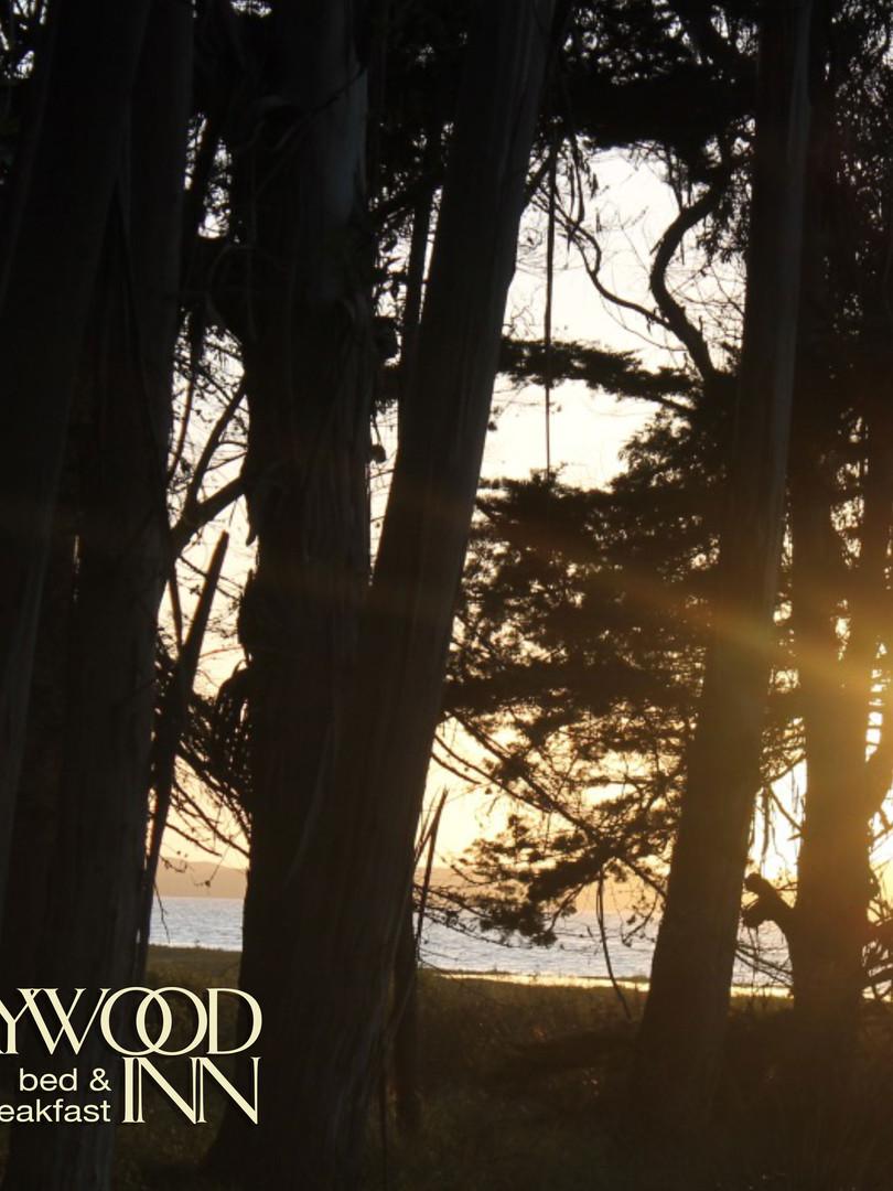 Estero-Forest-Sunset.jpg