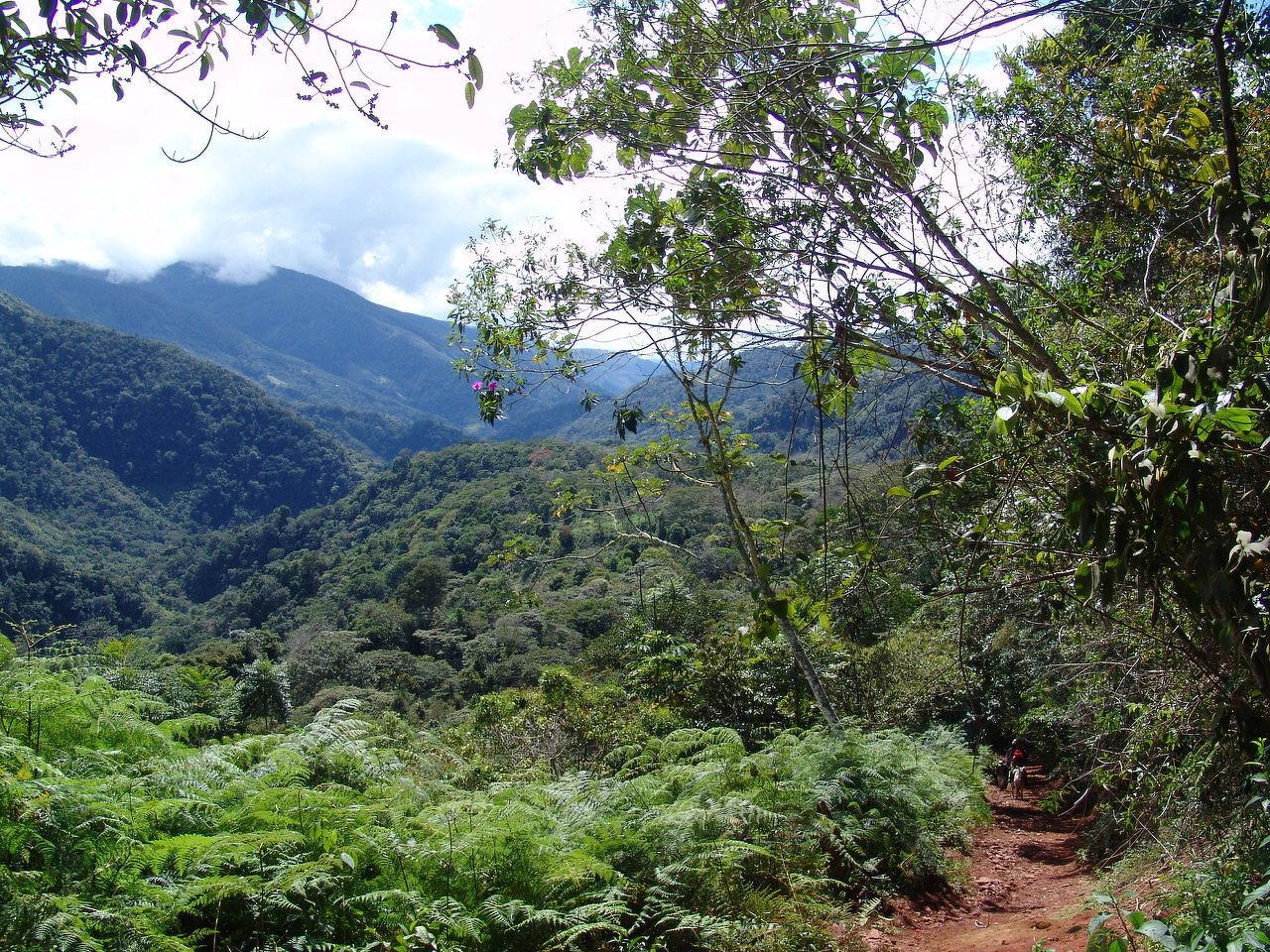 Le Pérou c'est aussi la jungle
