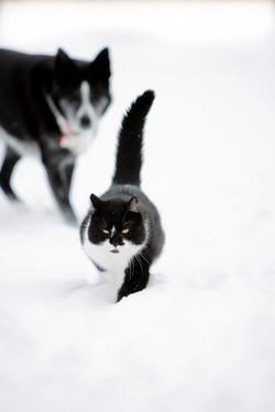 Tux and Oreo