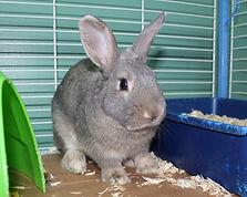 Rabbit 41648 3.jpg