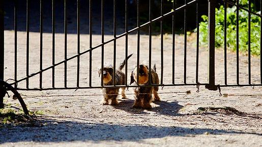 barking-dogs-gate-592648.jpg