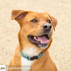 Copy of sgvhumanesociety-15869205613324