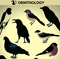 Ornithology.jpg