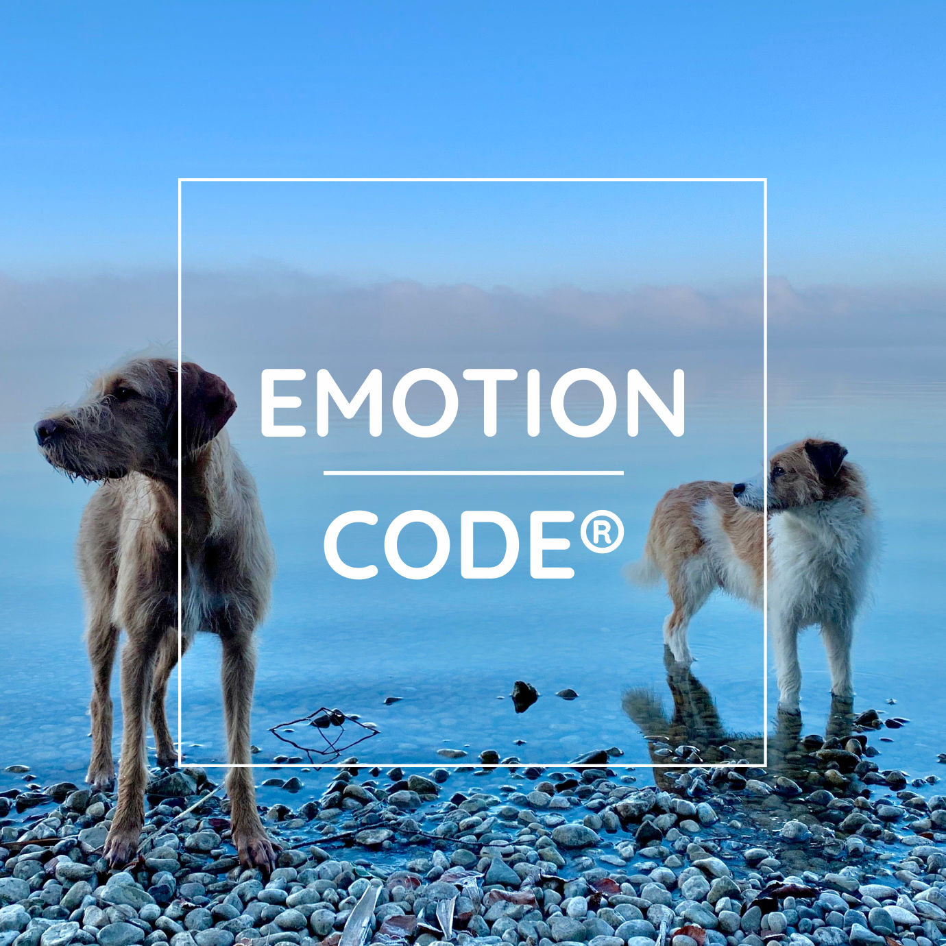 The Emotion Code® PETS