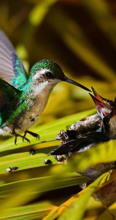 hummingbird nest garden